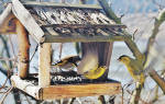 Можно ли кормить птиц говяжьим жиром