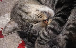Как усыпляют кошек в ветклиниках