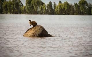 Почему случаются наводнения