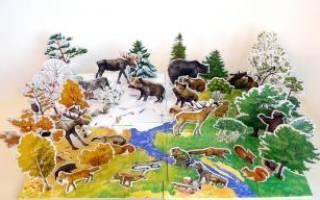 Каких животных можно увидеть осенью