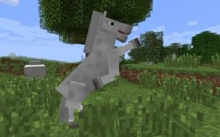 Как размножить лошадей в Майнкрафте