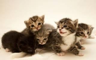 Какие есть клички для котов мальчиков