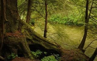Есть ли в России дождевые леса