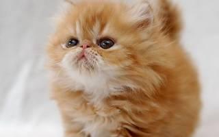 Когда можно отлучать котенка от кошки