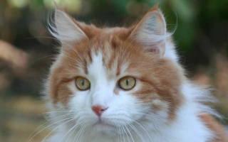 Почему идёт пена изо рта у кошки