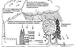 Какой дождь опасен для растений