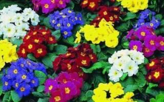 Какие садовые цветы любят тень