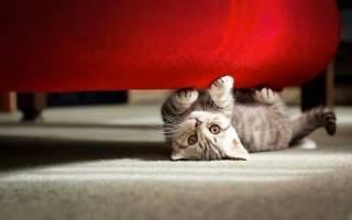Почему кошка не упоминается в Библии