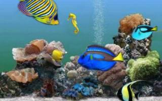 Каких рыб можно держать вместе