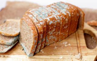 Почему хлеб быстро плесневеет