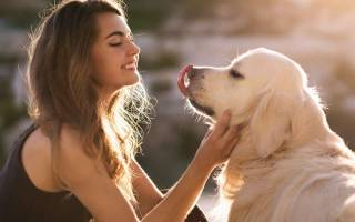 Почему собака облизывает хозяина
