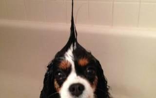 Можно ли мыть собаку обычным шампунем