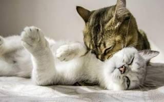 Как долго кошки привыкают друг к другу