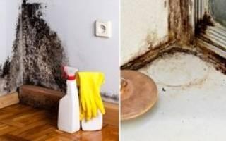 Как избавиться от влажности в доме
