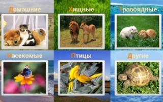 Какие звуки издают разные животные