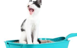 Что делать если у кошки запор