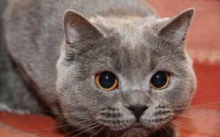Что делать если кот перестал есть