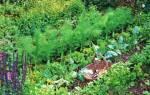 Что посадить в августе на огороде
