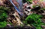 Как размножать растения в аквариуме