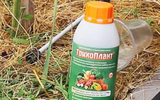 Как обеззаразить почву в огороде