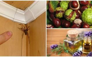 Как избавиться от пауков на балконе