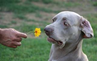 Какие запахи отпугивают собак