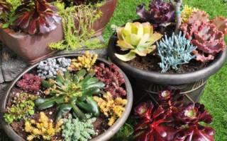 Зачем растениям нужен воздух