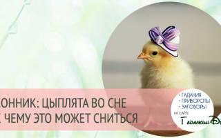 Что означает видеть во сне цыплят
