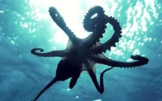 Почему осьминог так называется