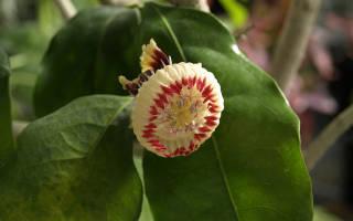 какое название у этого цветка